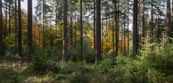 forêt bois énergie